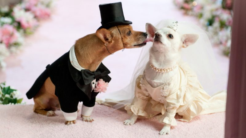 doggie-wedding